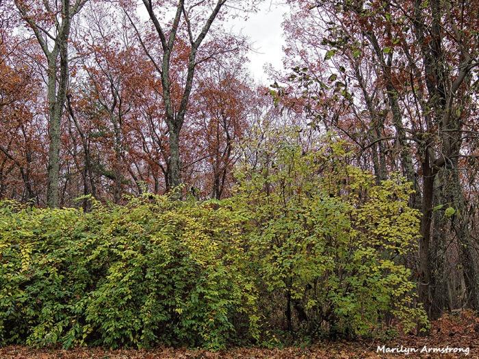 72-Fallen-Leaves-1105023_
