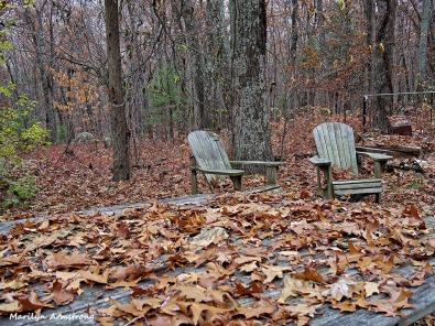 72-Fallen-Leaves-1105030_
