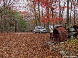 72-Fallen-Leaves-New-1105009_