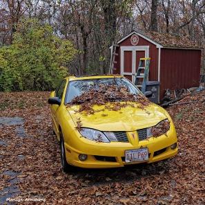 72-Fallen-Leaves-New-1105015_