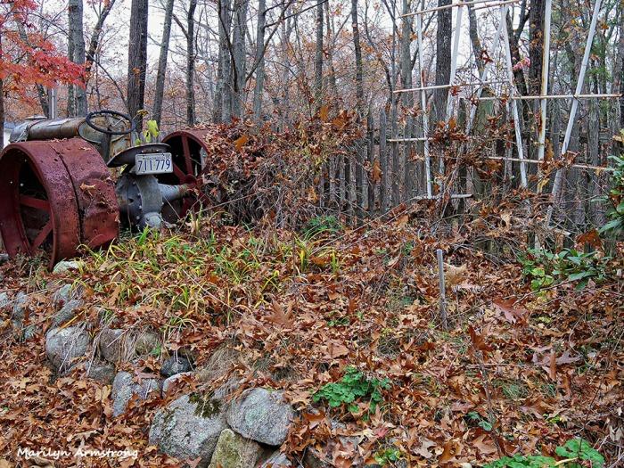 72-Garden-Fallen-Leaves-1105002_