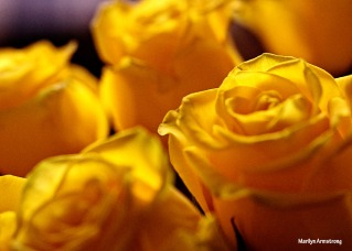 72-glass-canvas-yellow-roses-1104_019