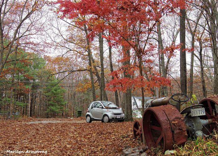 72-Herbie-Fallen-Leaves-1105007_
