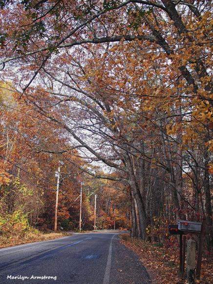72-late-autumn-1031-new_090