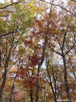 72-Late-November-Trees-1103_04