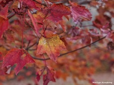 72-macro-maple-1031-new_054