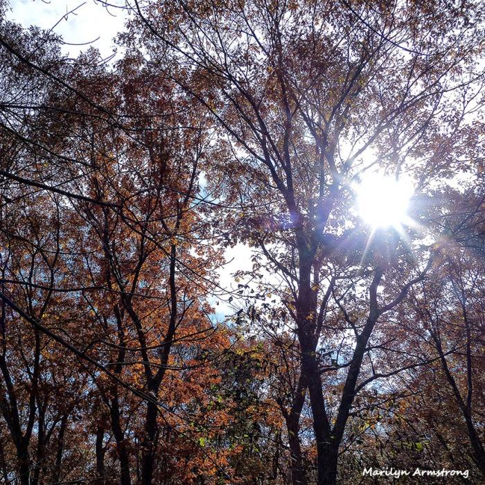72-November-Trees-1103-New_02