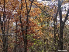 72-November-Trees-1103-New_26