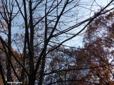 72-November-Trees-1103_01