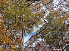72-November-Trees-1103_04