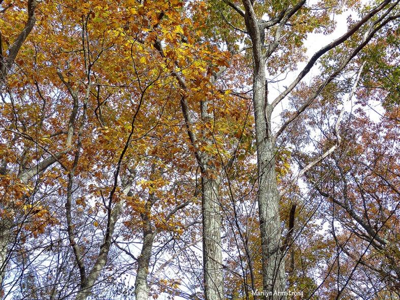 72-November-Trees-1103_18