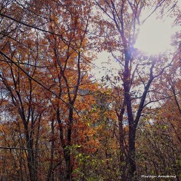 72-November-Trees-New-1103_01