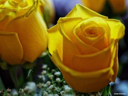 72-oil-yellow-roses-1104_026