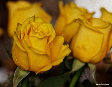 72-oil-yellow-roses-1104_040