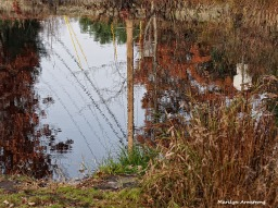 72-reflections-late-autumn-1031-new_102