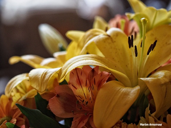 72-yellow-bouquet-112215_20