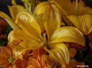 72-yellow-bouquet-oil-112215_07
