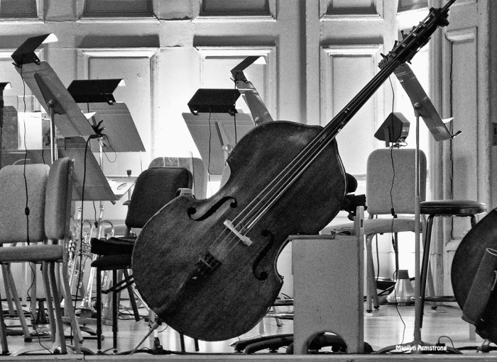 Bass fiddles at the Boston Pops