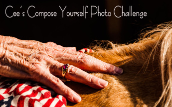 Cee-banner-compose-yourself-challenge2