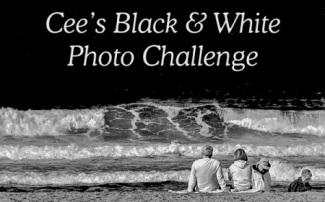 Cee's Black & White Photo Challenge Badge