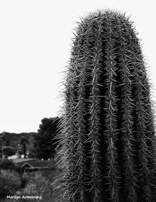 72-BW-Desert-View-newer-MAR-Phoenix-Mountains-01062015_199
