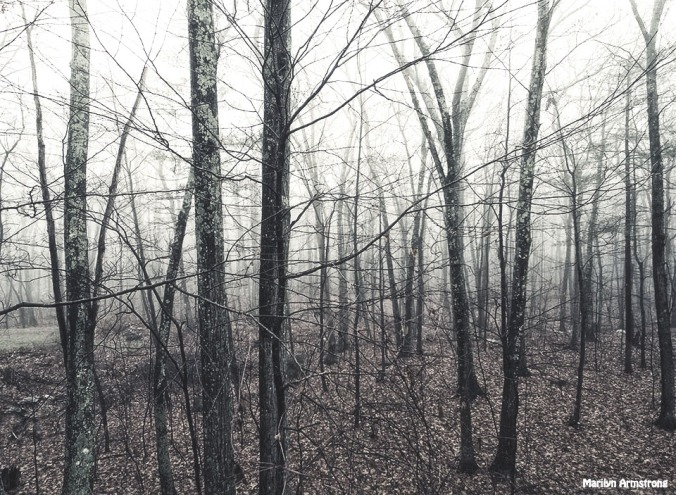 72-BW-Gray-Afternooon-Fog-120215_17