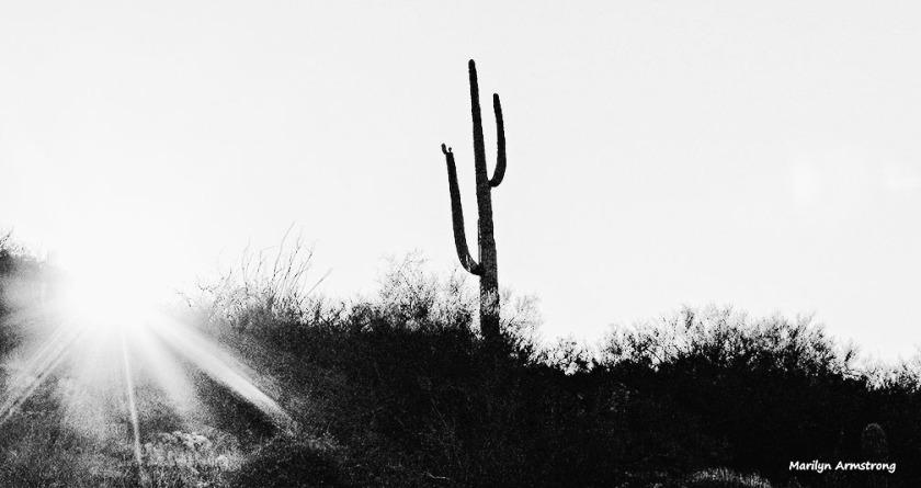 72-BW-Light of the desert-MAR-Superstition-011316_305