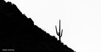 72-BW-Lone Cactus-MAR-Superstition-011316_285