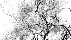 72-BW-Silhouette-Ironwood_05