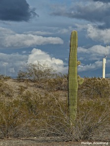 72-Cactus and transmitter-MAR-Phoenix-Mountains-Afternoon-01062015_063