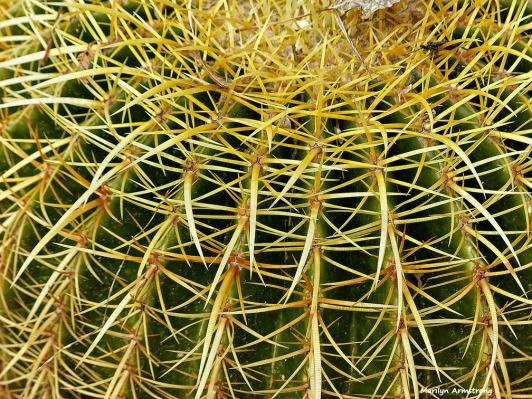 72-Cactus-MAR-Sunday-011016_138