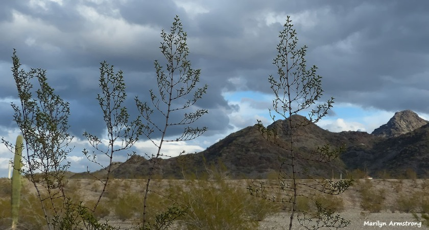 72-Clean-newer-MAR-Phoenix-Mountains-Afternoon-01062015_081