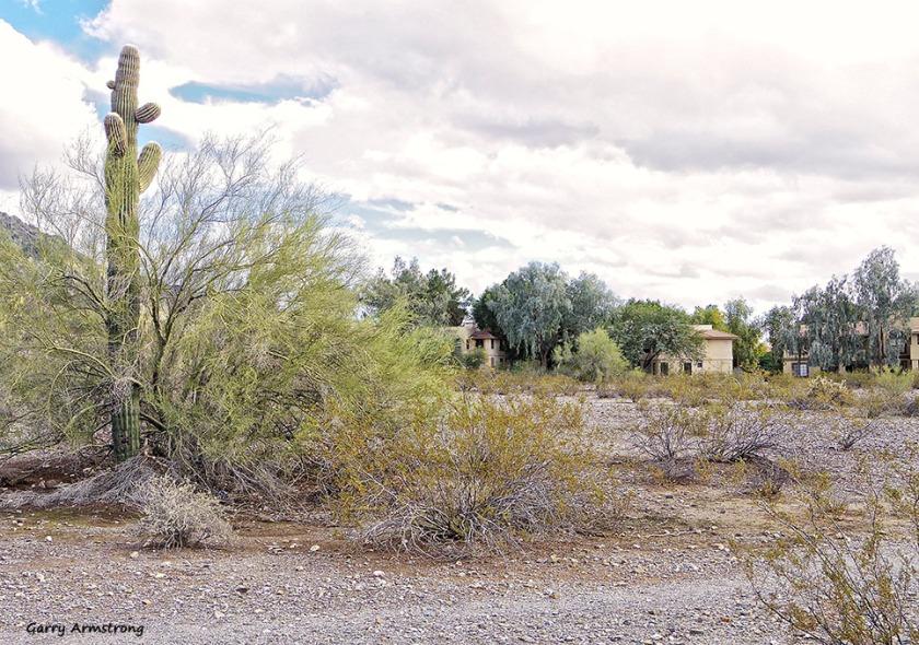 72-Gar-Phoenix-Mountains-01062015_031