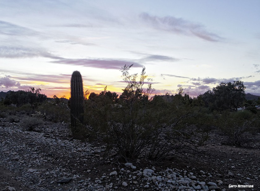 72-GAR-Sunset-Phoenix-Cactus-01062015_215