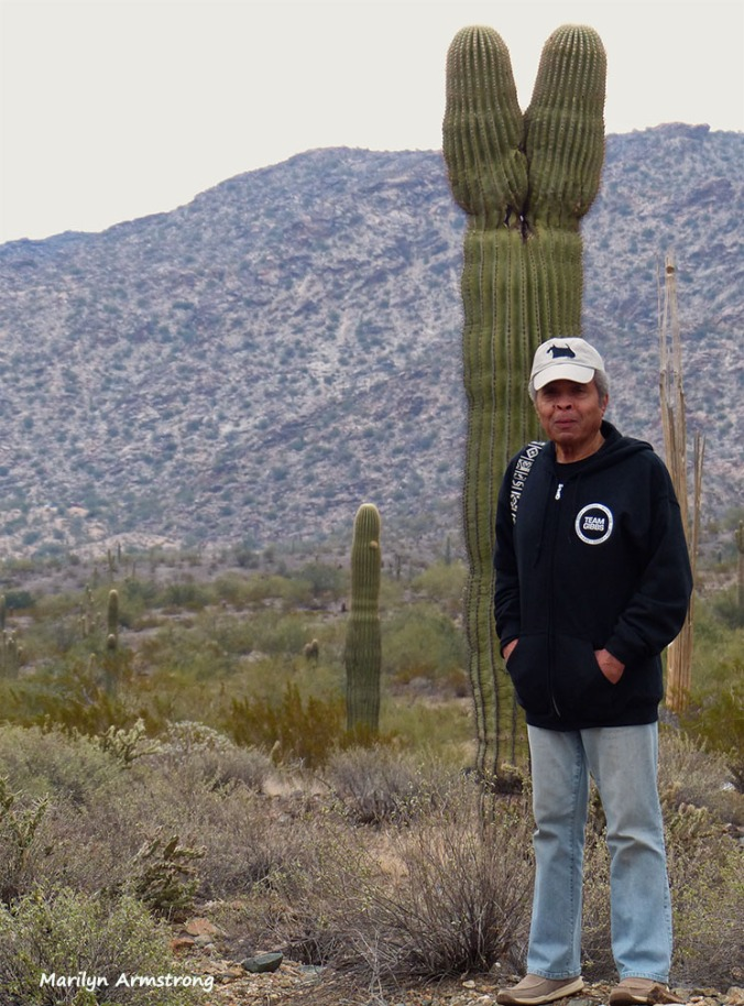 """Obviously, the cactus says """"Y"""""""