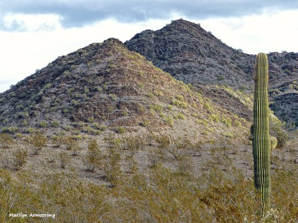 72-MAR-Phoenix-Mountains-Afternoon-01062015_013