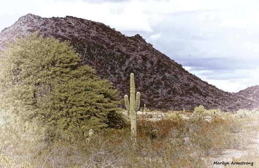 72-MAR-Phoenix-Vintage-Perspective-01062015_049