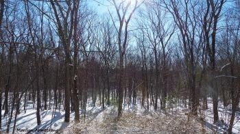 72-Morning Snow_20160124_0002