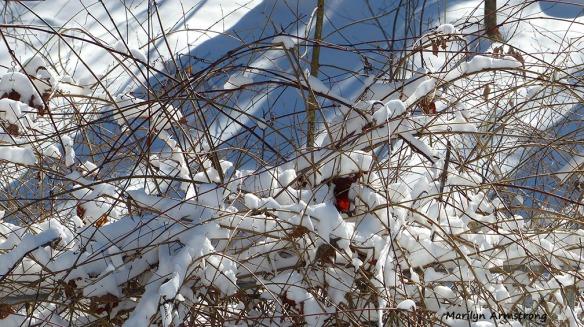 72-Morning Snow_20160124_0009