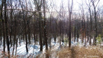 72-New-Snow-01182016_01