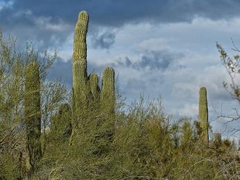 72-Original-MAR-Phoenix-Mountains-Afternoon-01062015_083