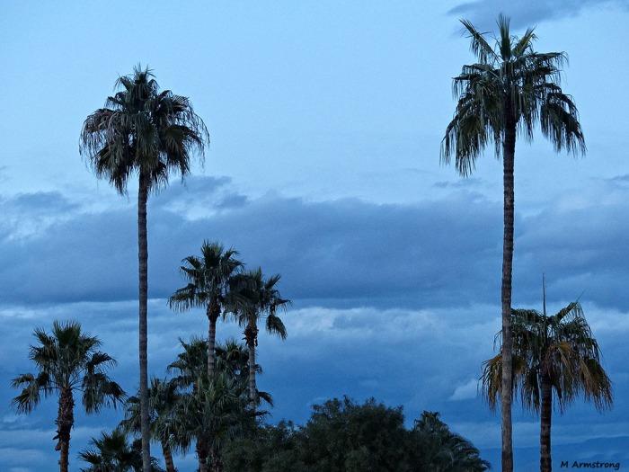 72-Palm-Trees-MAR-Phoenix-Mountains-Sunset-01062015_208