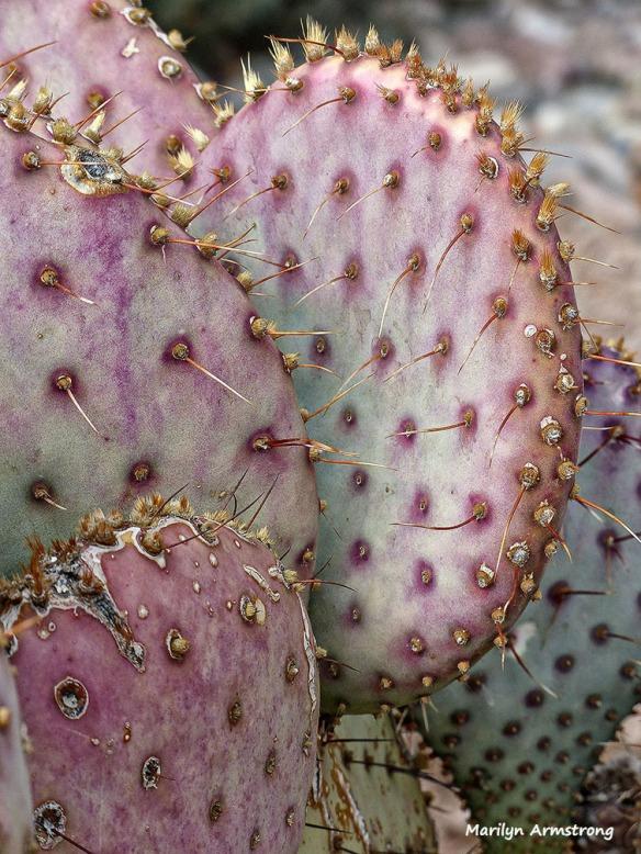 Pink cactus?