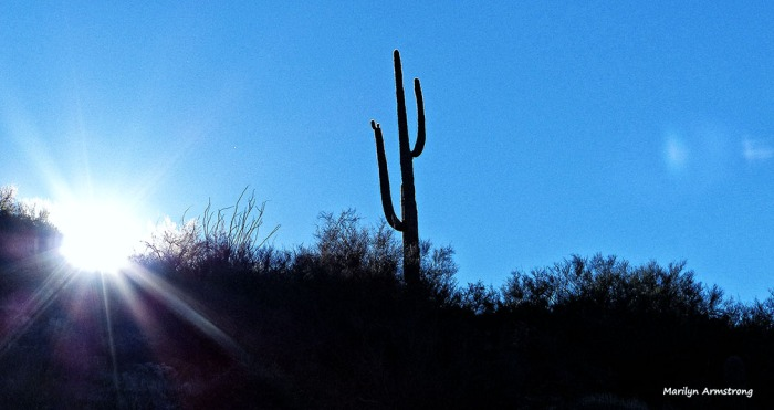 72-Saguaro-Sunset-MAR-Superstition-011316_305