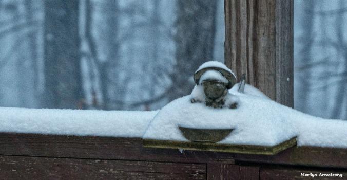 72-Snow-01232016_13