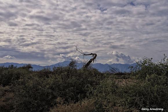 72-Trail to Wild Horse Pass-GAR-Sunday-011016_225