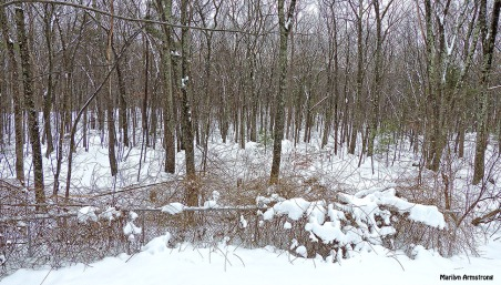 72-Backyard-Snow-Monday-020916_005