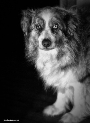 72-bw-bishop-eyes-120215_25