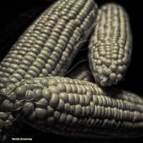 72-BW-corn-on-the-cob_28