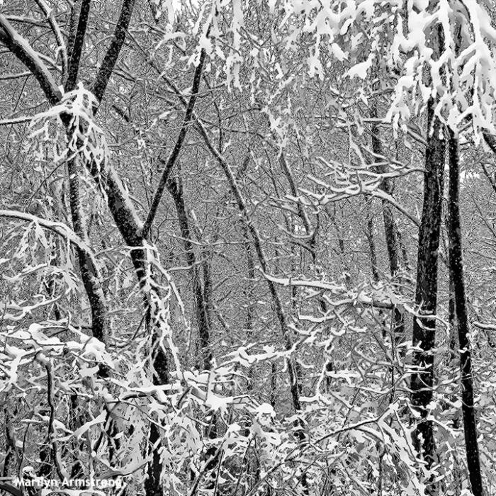 72-bw-snow-020516_08